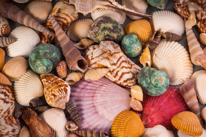 Diversità di Molusce - colori di vita di mare fotografia stock libera da diritti