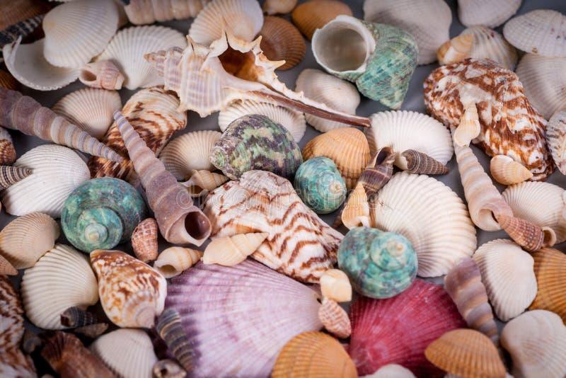 Diversità di Molusce - vita di mare fotografia stock libera da diritti