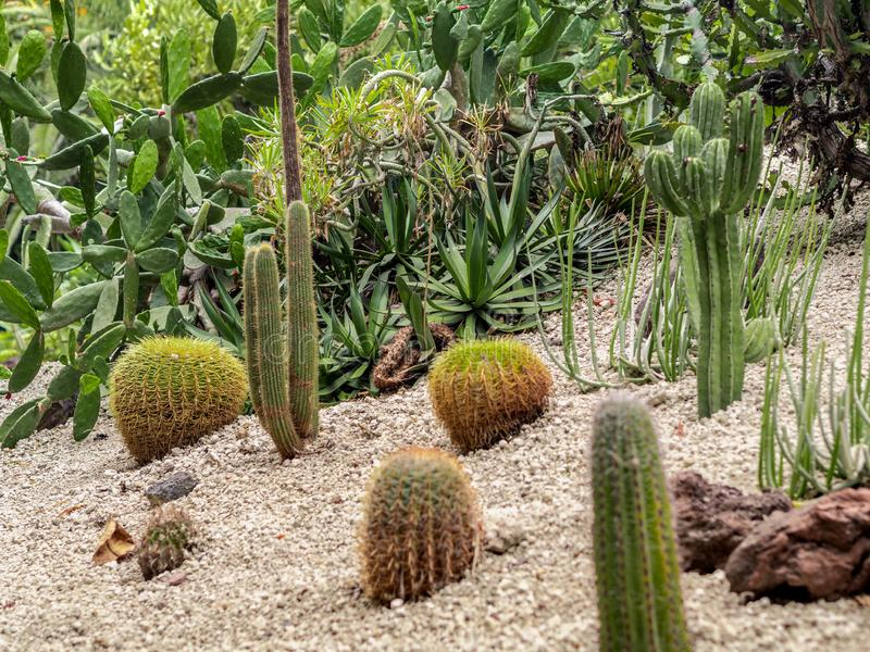 Diversité énorme de cactus dans différentes formes, tailles, et longueurs dans le paysage de désert photographie stock