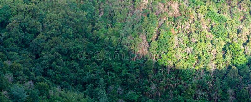 Diversité d'arbre de forêt avec la lumière du soleil, d'ombre des nuages et de montagne - utilisation pour le fond images stock