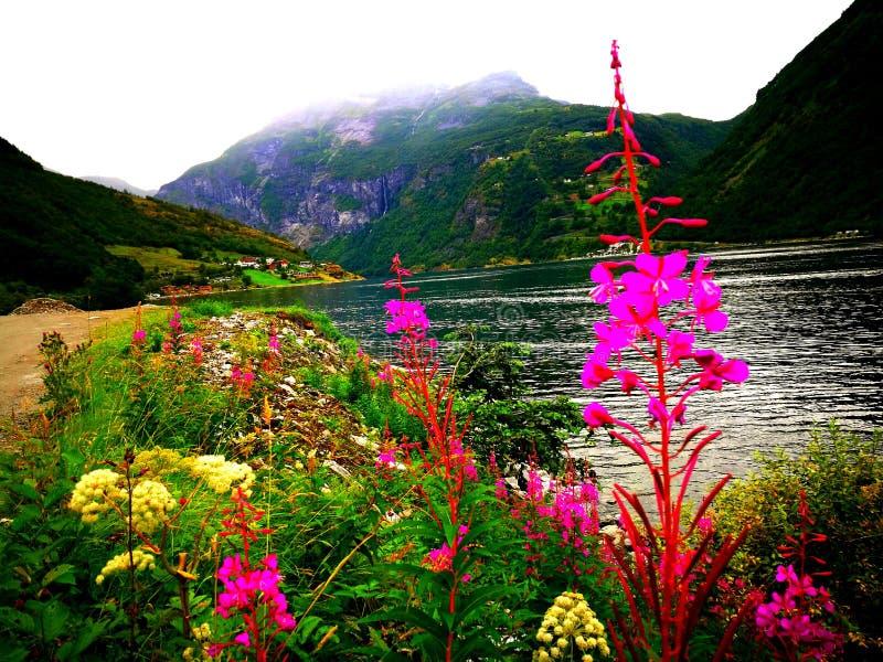 Diversiteit van bosbloemen in Noorwegen stock afbeeldingen