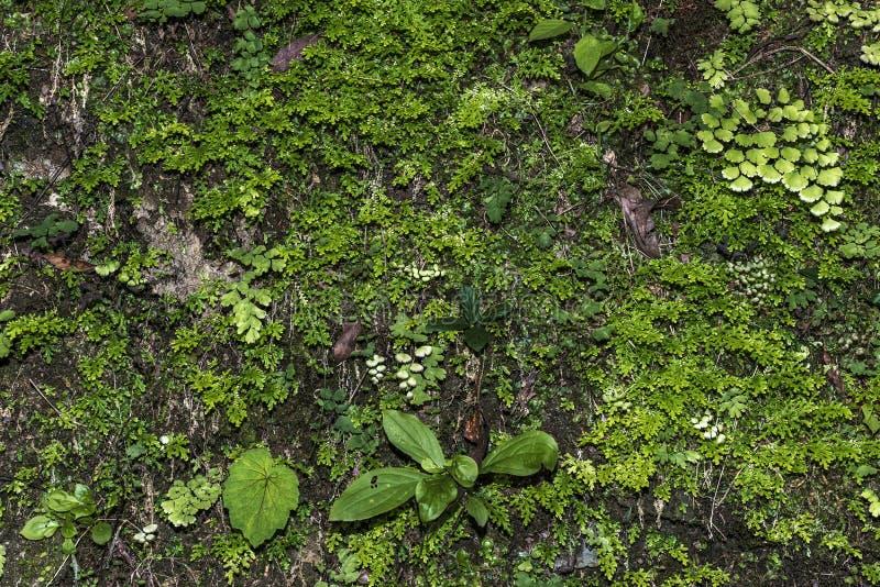 Diversity of wild plants royalty free stock image
