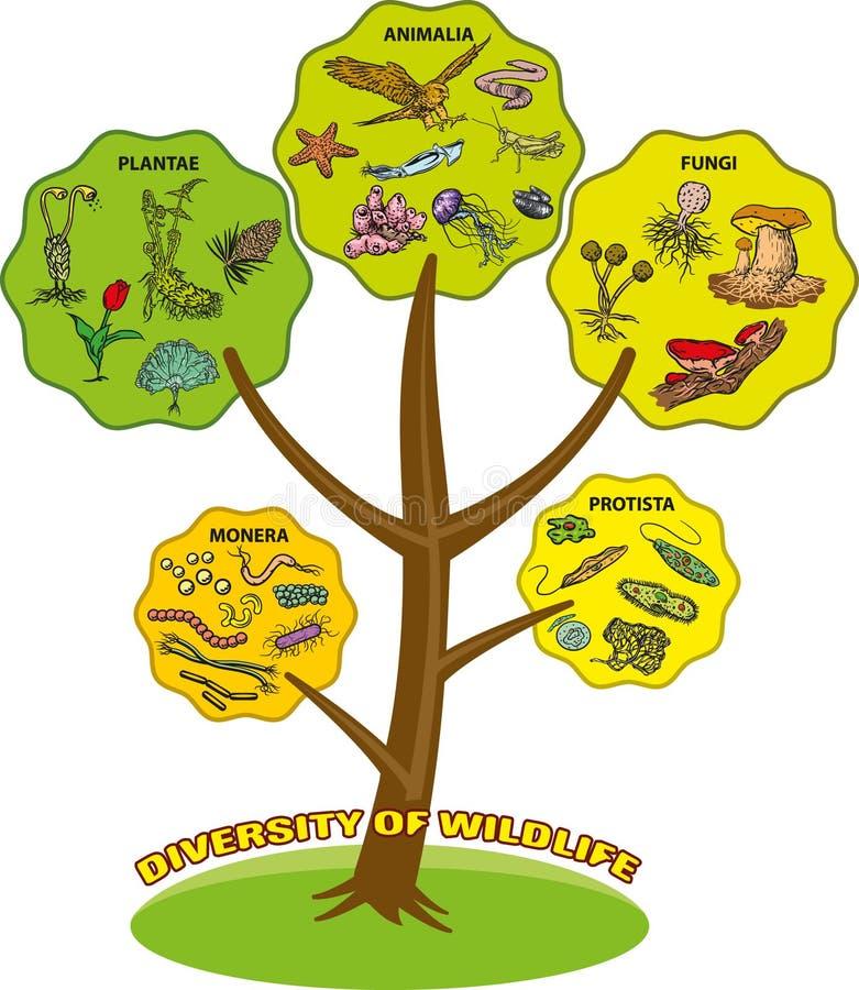 Diversity of wildlife stock illustration