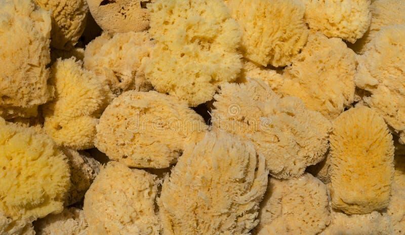 Diverso amarillo y esponjas del mar de Brown imagen de archivo