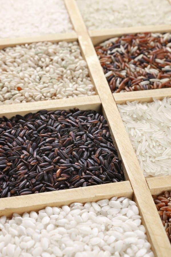 Diverso arroz en caja fotografía de archivo libre de regalías