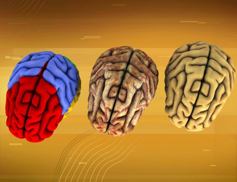 Diverso cerebro tres ilustración del vector
