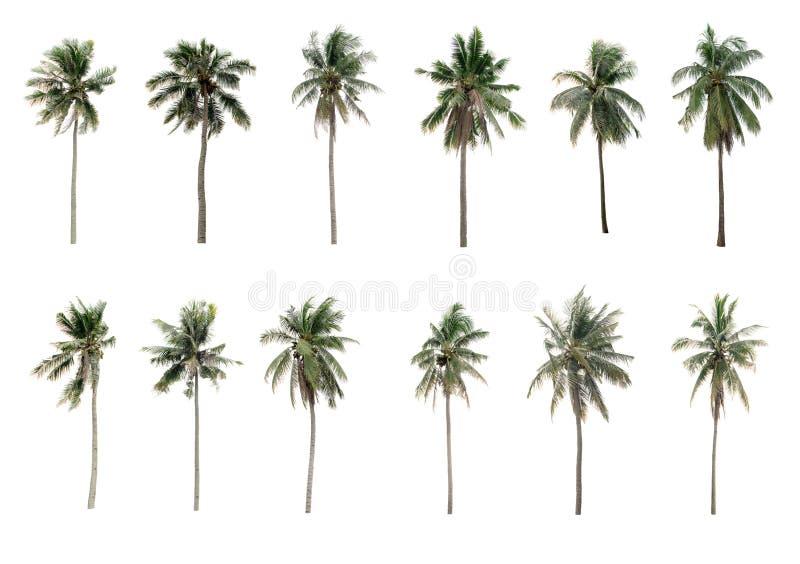 Diverso coco de las palmas de la colección el jardín aislado en blanco fotografía de archivo libre de regalías
