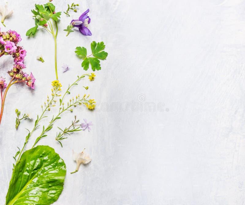 Diverso de la primavera o flores y plantas del verano en el fondo de madera ligero, visión superior imagen de archivo