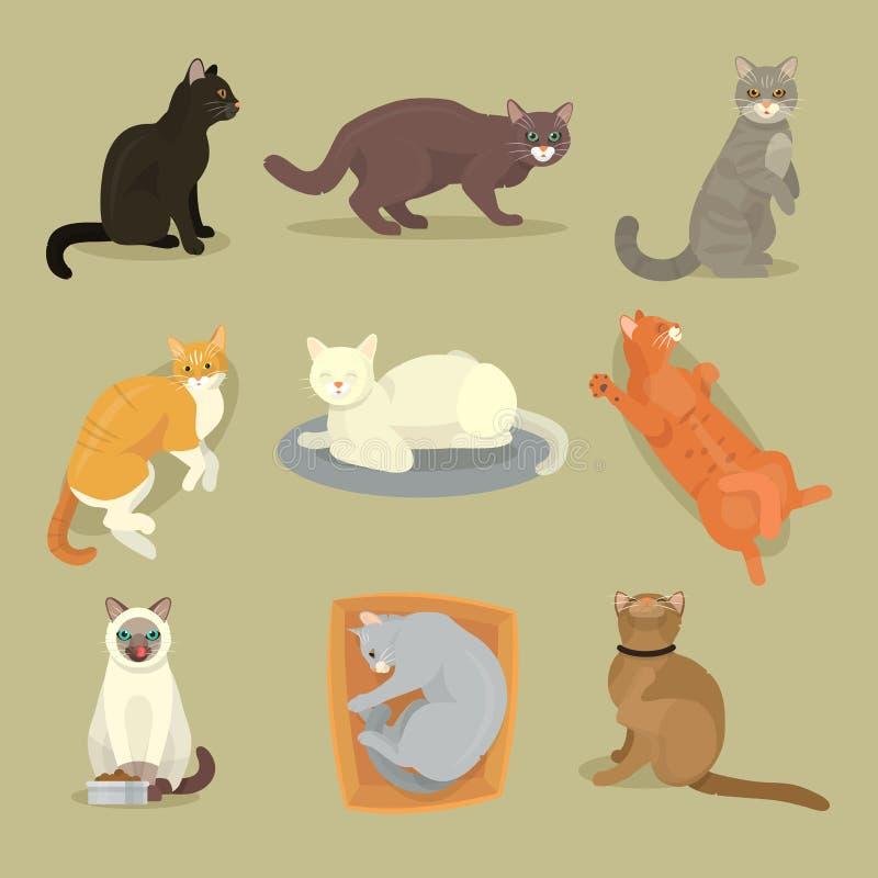 Diverso gato cría el ejemplo felino del gatito del animal doméstico del juego de caracteres gatuno animal lindo lindo de la histo stock de ilustración