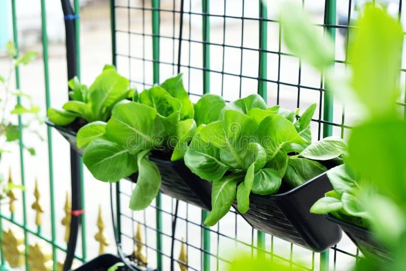 Diverso jardín de verduras orgánico en área de la casa fotografía de archivo