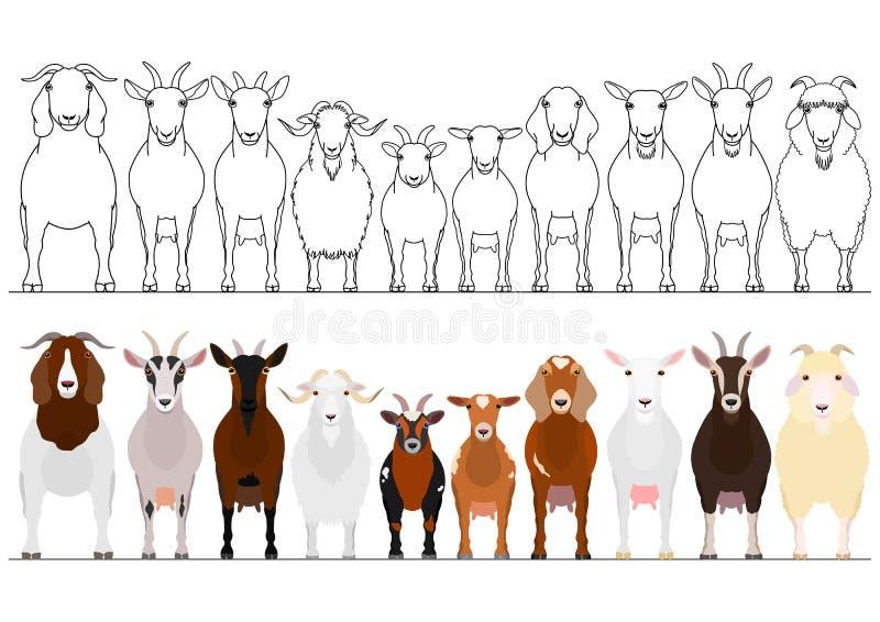 Diverso sistema de la frontera de las cabras stock de ilustración