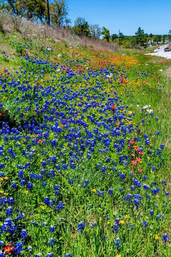 Diverso Texas Wildflowers imagen de archivo