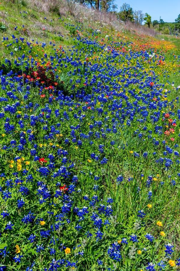 Diverso Texas Wildflowers fotos de archivo