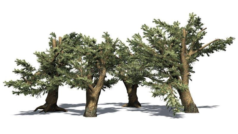 Diverso vário cedro de árvores de Líbano ilustração do vetor