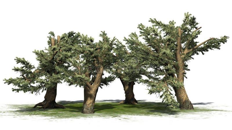 Diverso vário cedro de árvores de Líbano ilustração royalty free