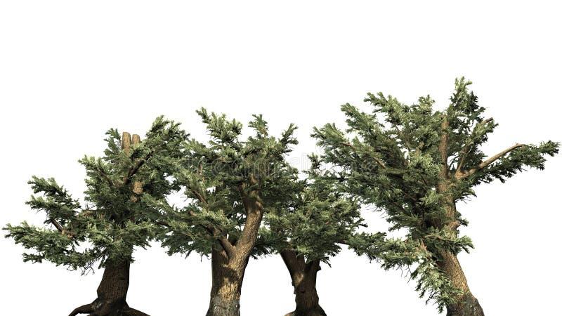 Diverso vário cedro de árvores de Líbano ilustração stock