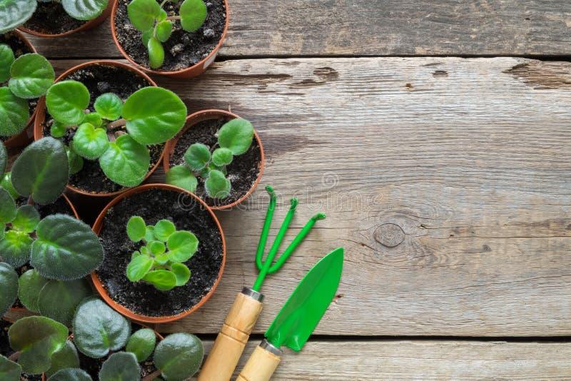 Diverso vaso de flores das plantas home Plantando flores em pasta e ferramentas de jardim imagem de stock royalty free
