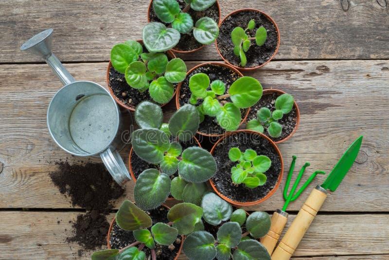 Diverso vaso de flores das plantas home Plantando flores em pasta, a lata molhando e as ferramentas de jardim foto de stock royalty free