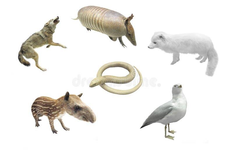 Diversos animales fotografía de archivo