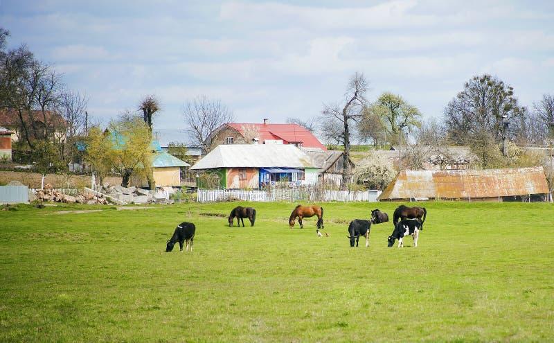 Diversos animales del campo pastan en prado imágenes de archivo libres de regalías