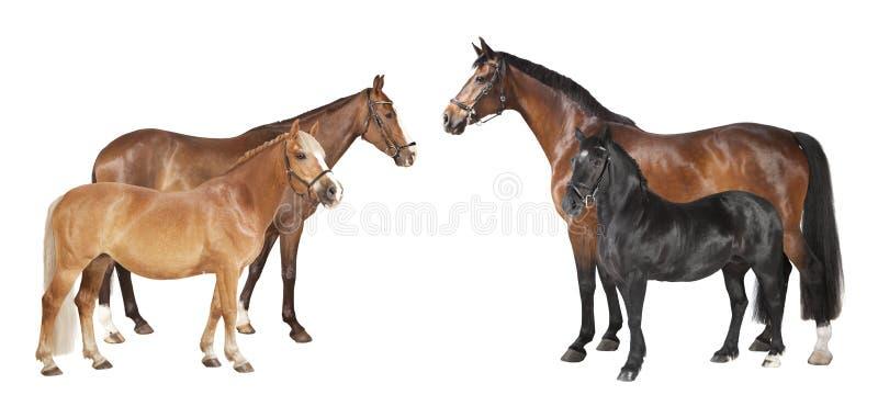 Diversos caballos aislados imagen de archivo
