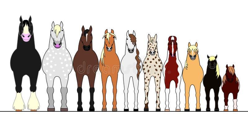Diversos caballos que se alinean en orden de la altura libre illustration