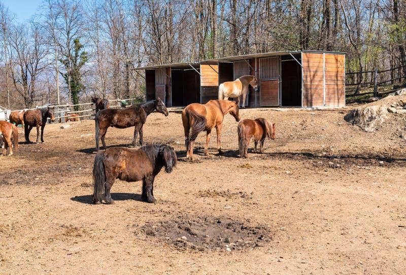 Diversos cavalos no alimento de espera da exploração agrícola do prado foto de stock royalty free