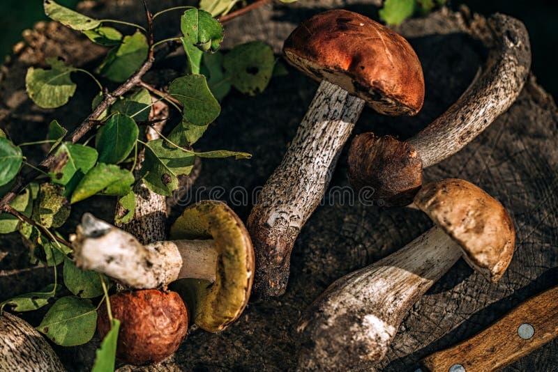 Diversos cogumelos da floresta em um coto de madeira foto de stock
