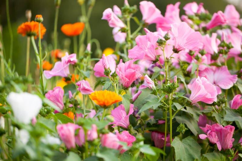 Diversos colores de flores en el verano fotografía de archivo libre de regalías