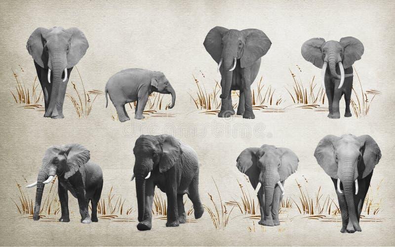 Diversos elefantes para el papel pintado, en fondo representación 3d stock de ilustración