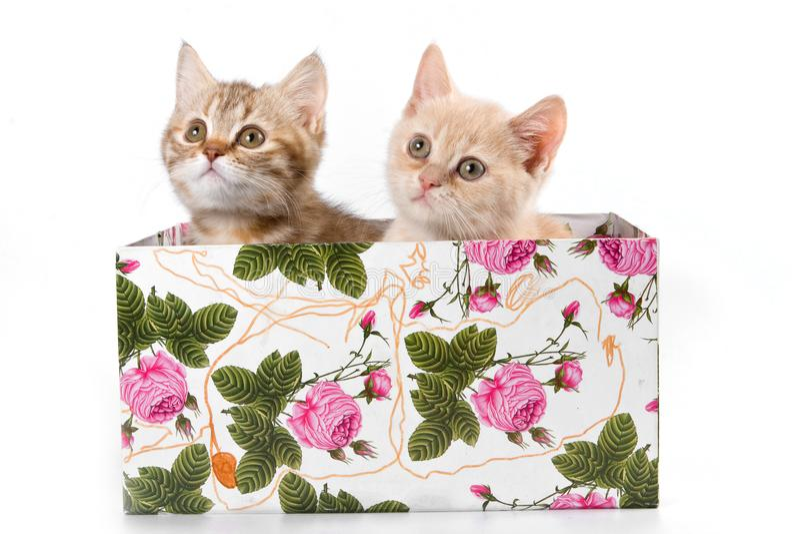Diversos gatinhos em uma caixa com flores foto de stock royalty free