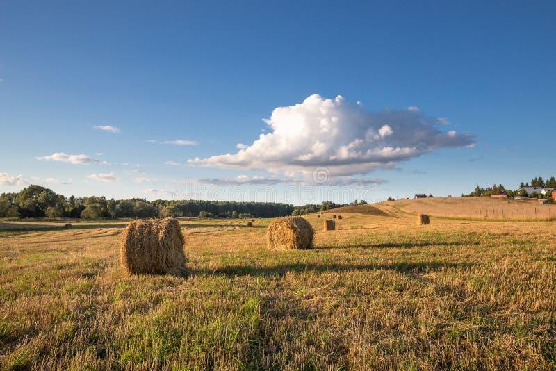 Diversos monte de feno redondos, iluminados pelo sol de ajuste, encontram-se em um prado chanfrado sob um céu azul com uma nuvem  imagens de stock