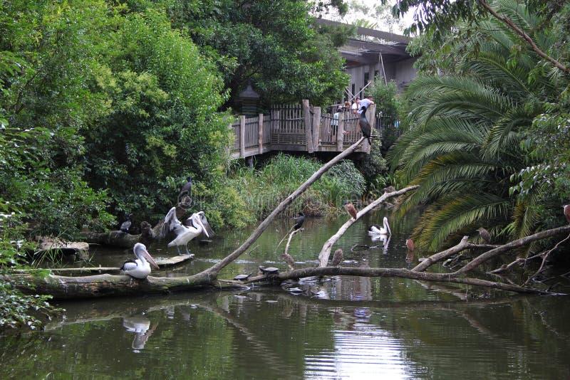 Diversos pájaros en el lago imagen de archivo libre de regalías