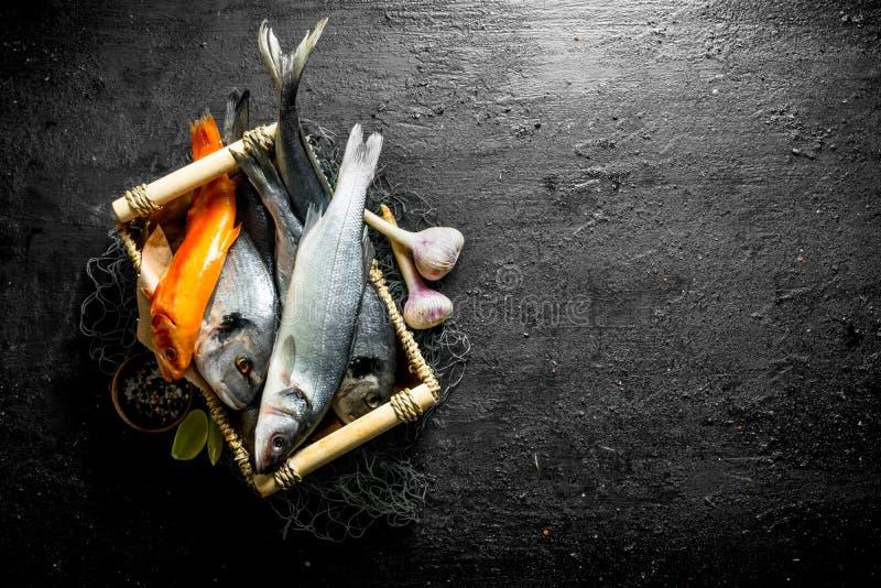 Diversos pescados de mar en la bandeja con las rebanadas del ajo y de la cal foto de archivo libre de regalías