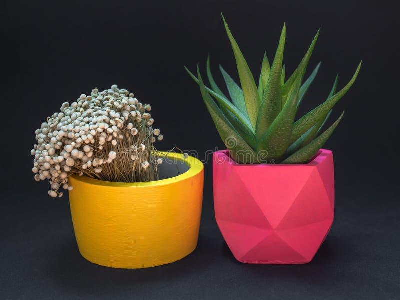 Diversos plantadores concretos geométricos hermosos con el cactus, la flor y la planta suculenta Potes concretos pintados colorid fotografía de archivo libre de regalías