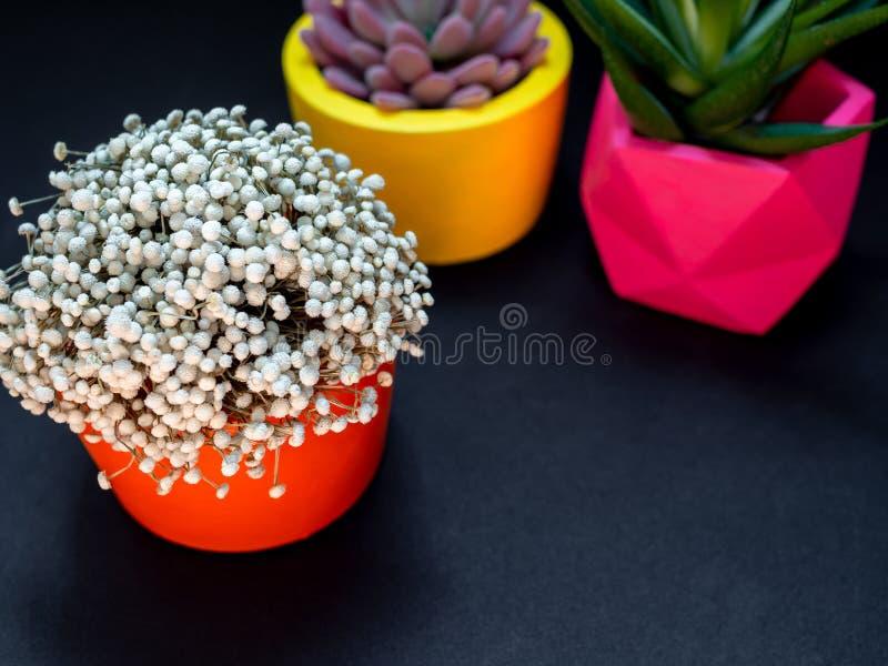 Diversos plantadores concretos geométricos hermosos con el cactus, la flor y la planta suculenta Potes concretos pintados colorid imagen de archivo libre de regalías