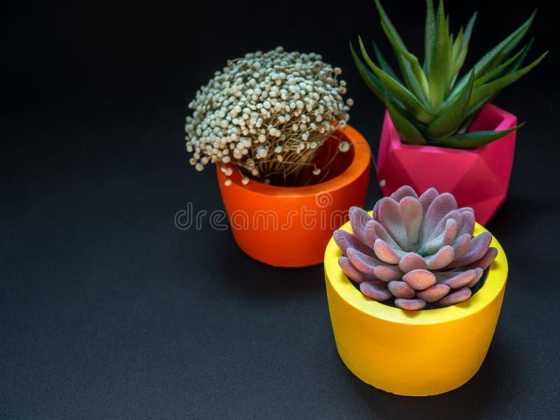 Diversos plantadores concretos geométricos hermosos con el cactus, la flor y la planta suculenta Potes concretos pintados colorid imagenes de archivo