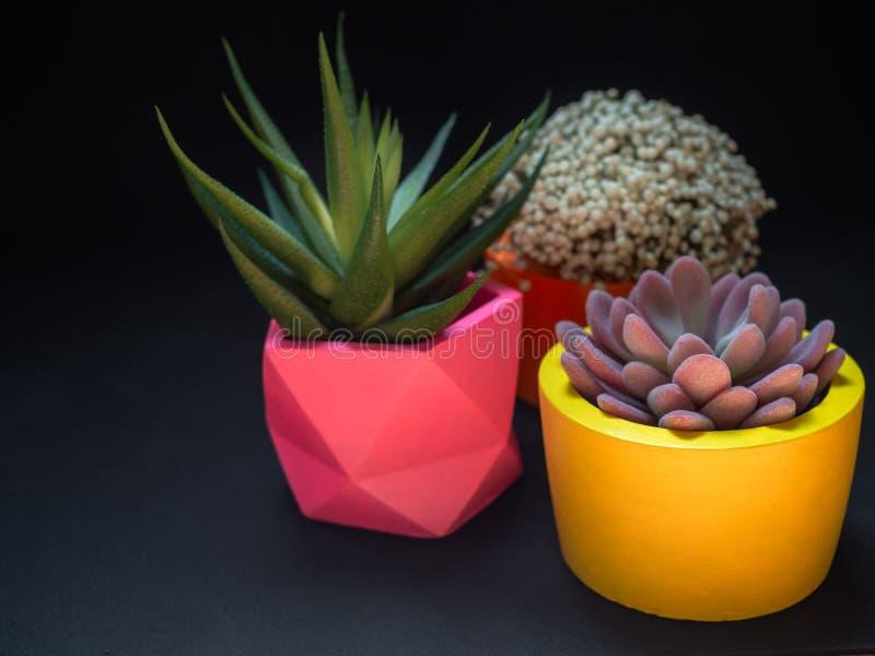 Diversos plantadores concretos geométricos hermosos con el cactus, la flor y la planta suculenta Potes concretos pintados colorid foto de archivo