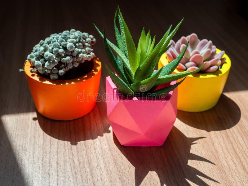 Diversos plantadores concretos geométricos hermosos con el cactus, la flor y la planta suculenta Potes concretos pintados colorid foto de archivo libre de regalías
