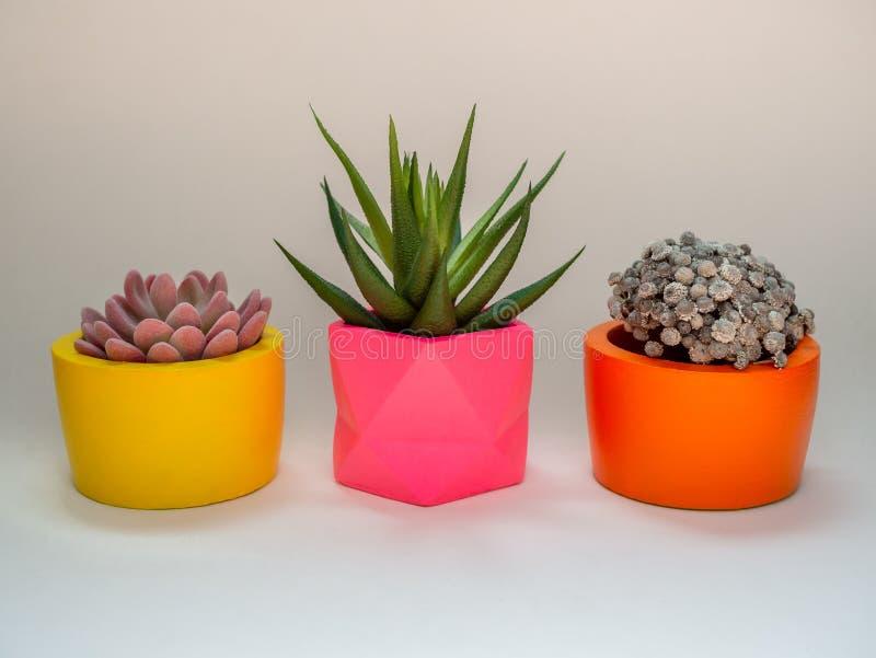 Diversos plantadores concretos geométricos hermosos con el cactus, la flor y la planta suculenta Potes concretos pintados colorid imagen de archivo