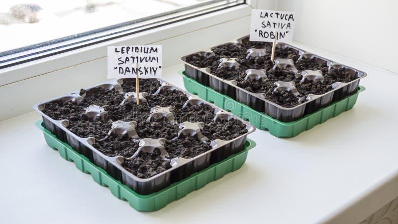Diversos recipientes plásticos com solo do jardim Plântula-imagem plantada foto de stock royalty free