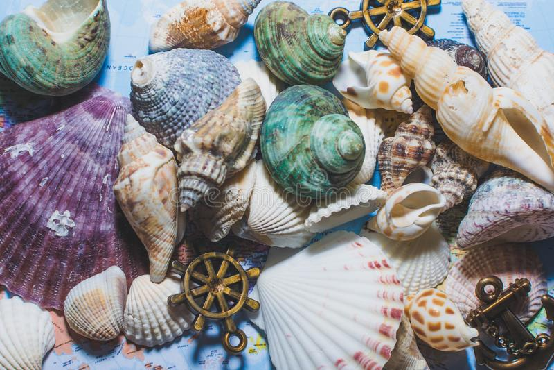 Diversos shelles del mar foto de archivo