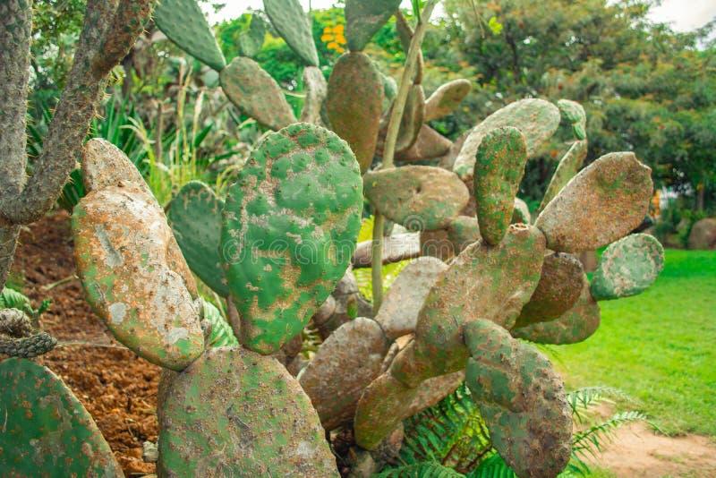 Diversos tipos de cactus fotografía de archivo