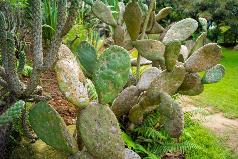 Diversos tipos de cactus fotos de archivo