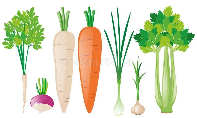 Diversos tipos de verduras de raíz stock de ilustración