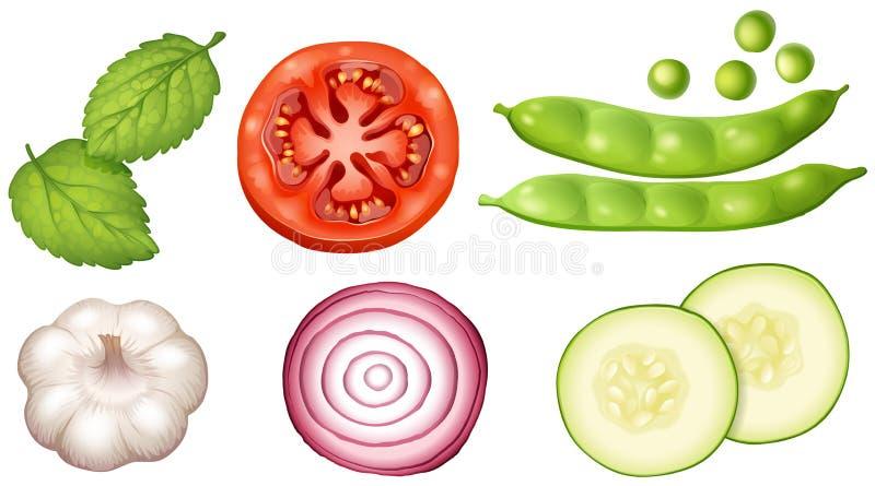 Diversos tipos de verduras en el fondo blanco ilustración del vector