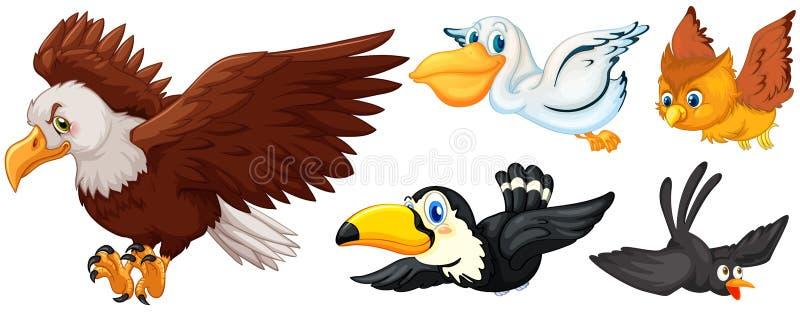 Diversos tipos de volar de los pájaros stock de ilustración