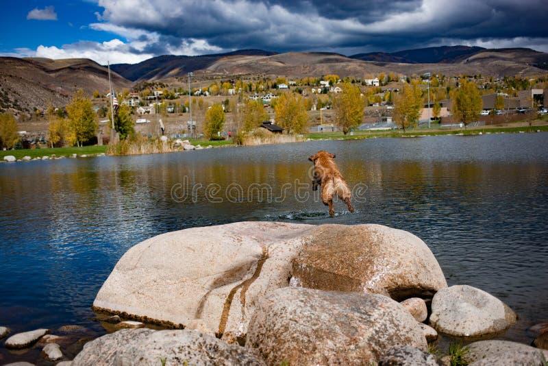 Divertimento del cane di estate immagine stock libera da diritti