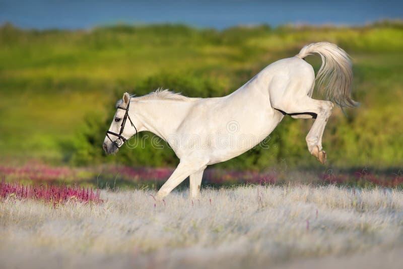 Divertimento del cavallo bianco fotografia stock