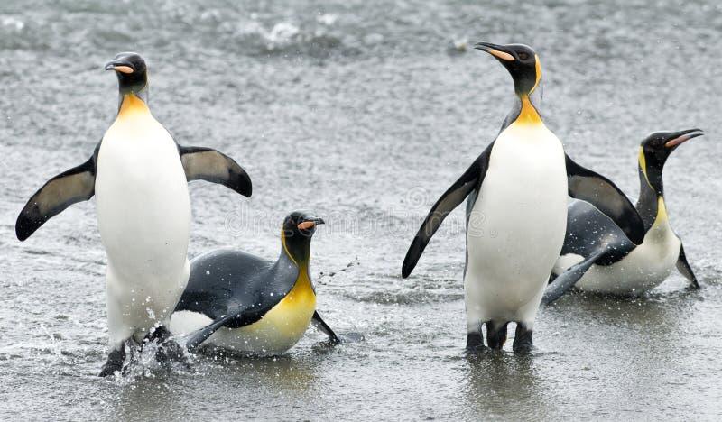 Divertimento del pinguino nelle onde immagini stock